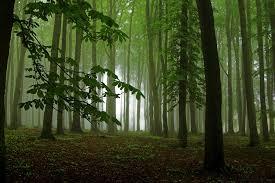 Zvuky lesa a přírody