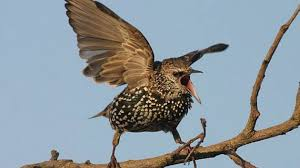 Ptačí koledníci