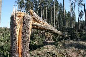 Zlomený stromek